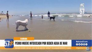 Perro-muere-intoxicado-por-beber-agua-de-mar