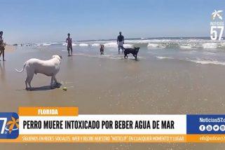 Perro muere intoxicado por beber agua de mar