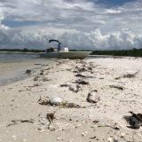 Playas de Indian River y Pepper Park en St. Lucie cerradas por marea roja