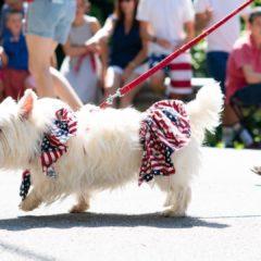 """Desfile de modas con """"bomberos y perros"""" para recaudar fondos en Boca Raton"""