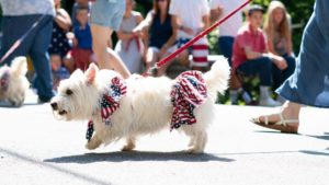 4th-of-July-Parade-with-Dogs-1920x1080