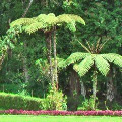 Mounts Botanical Garden de West Palm Beach se viste de luces en esta Navidad