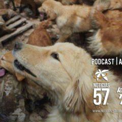 Salvan perros de ser sacrificados y vendida su carne para comida