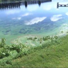 Peligro por algas verdes en el Lago Okeechobee