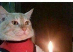 Gato arroja una vela sobre un colchón y produce incendio en Port St. Lucie