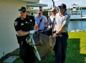 Tortuga de 200lb con corte en el caparazón salvada por pescador y autoridades