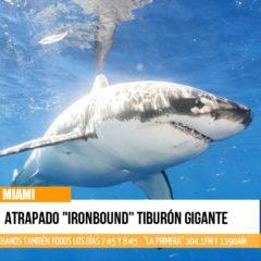 """Avance informativo: Atrapado el tiburón gigante """"Ironbound"""""""