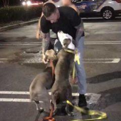 2 perros estuvieron 32 horas dentro de una camioneta en estacionamiento de Boca Raton